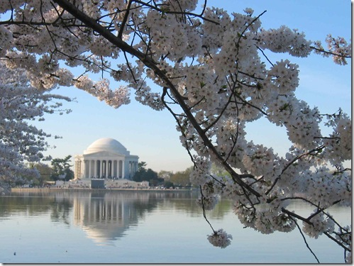jefferson-memorial-at-cherry-blossom-time