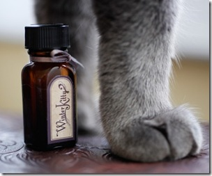winter kitty perfume