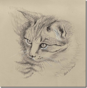 etsy_rkartstudio cat sketch