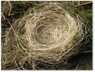 Nest with shadow